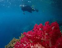 Image 12 Days  11 Nights North Raja Ampat Cruises And Snorkeling