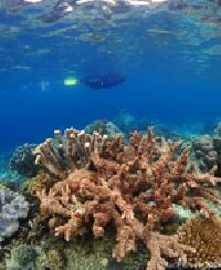 Image Great Raja Ampat Cruises 12 Days 11 Nights